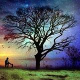 Раскраска дерево без листьев
