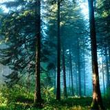 Раскраска лес