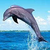 Раскраска дельфин