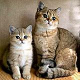 Раскраска кошки и котята