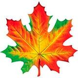 Раскраска лист кленовый