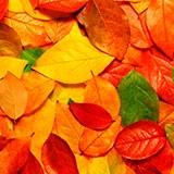 Раскраска осенние листья