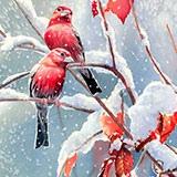 Раскраска птицы зимой