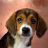 Раскраска щенок