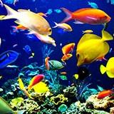 Раскраски рыбки