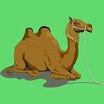 Раскраска верблюд