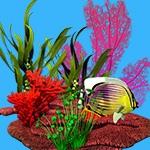 Раскраска водоросли