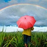 Раскраска зонтик