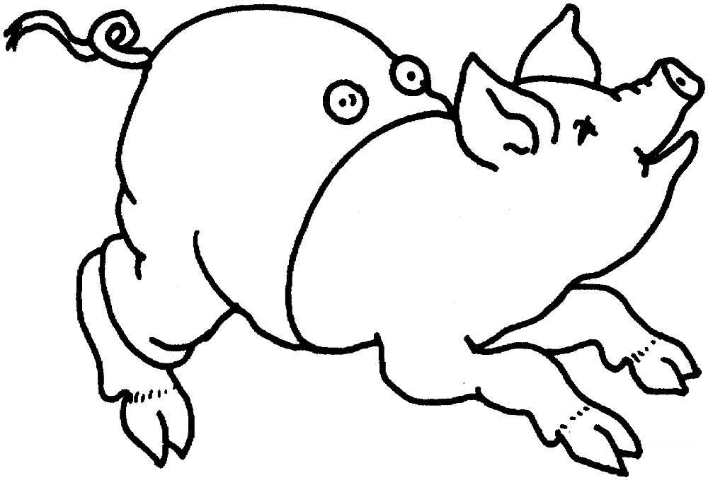 Смешная свинка картинка на окно, коал смешно