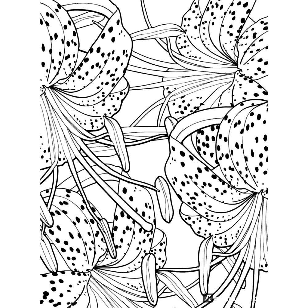 Раскраски цветы антистресс скачать и распечатать