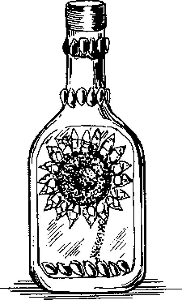 Подсолнечное масло картинка раскраска