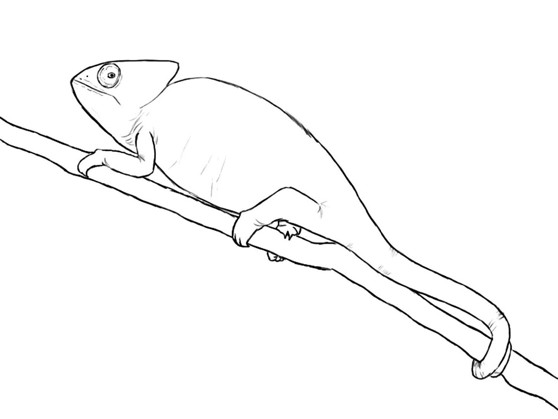 картинки как рисовать хамелеона прекрасный