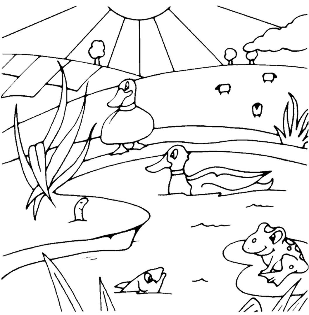 Раскраска пруда картинки