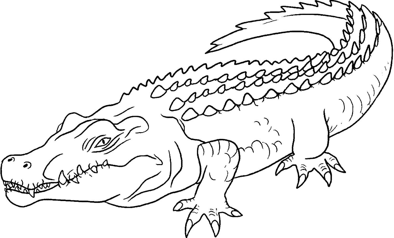 использовании аллигатор картинка раскраска что несут душевные