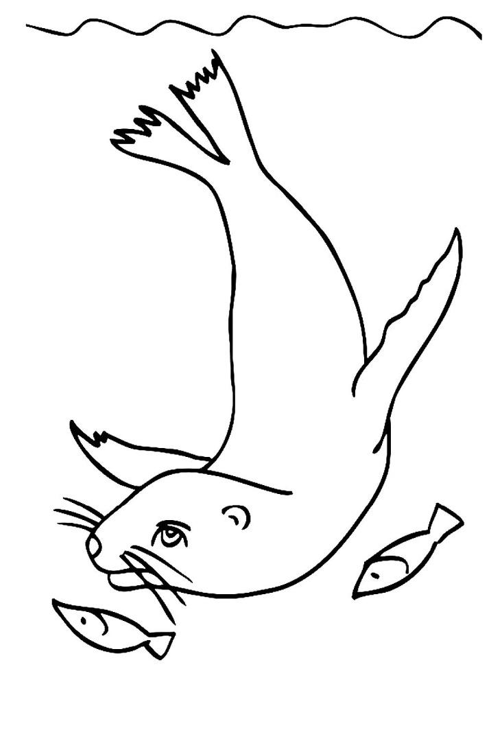 Раскраска морской котик скачать и распечатать