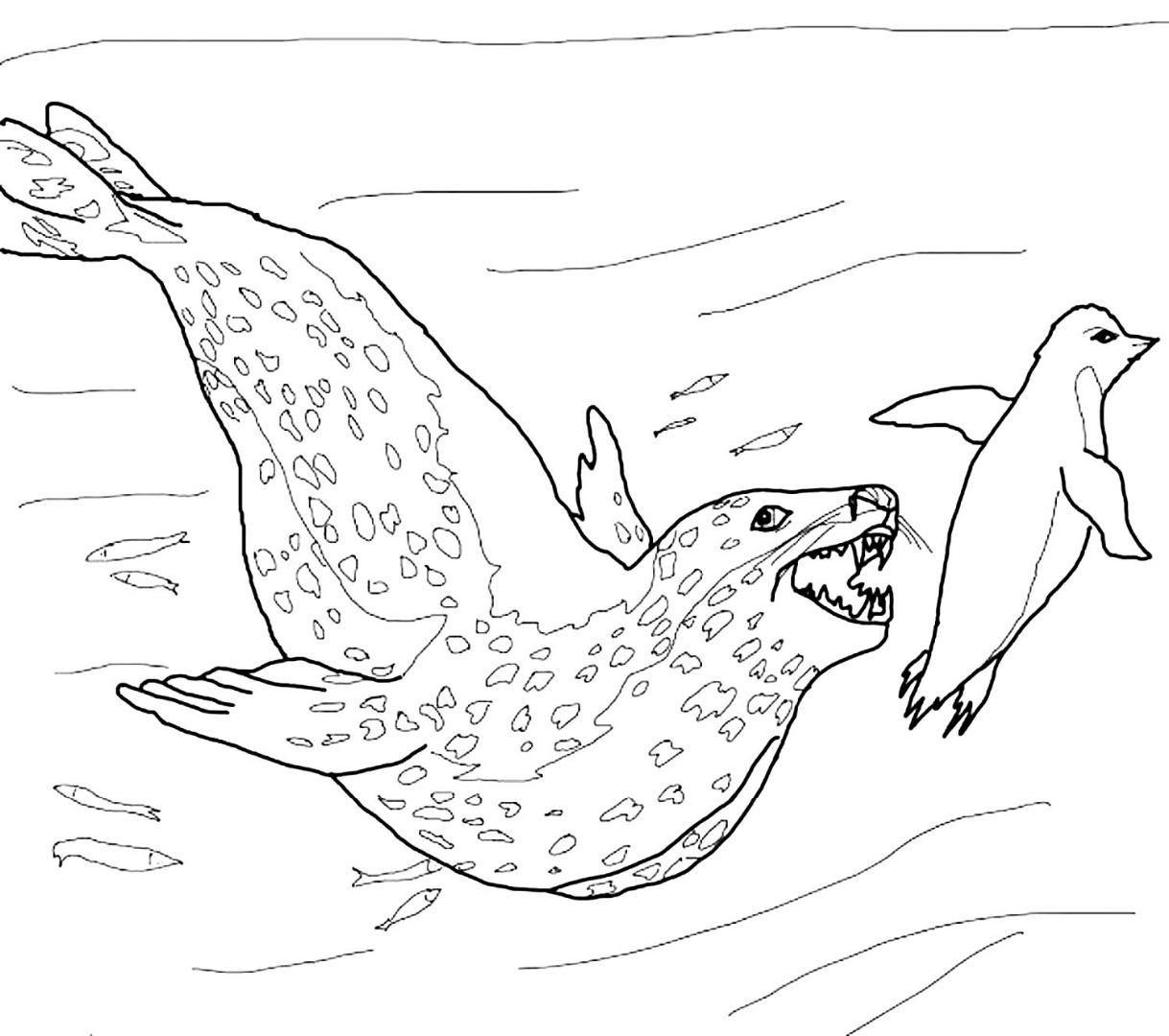 Раскраска для детей тюлень на льдине