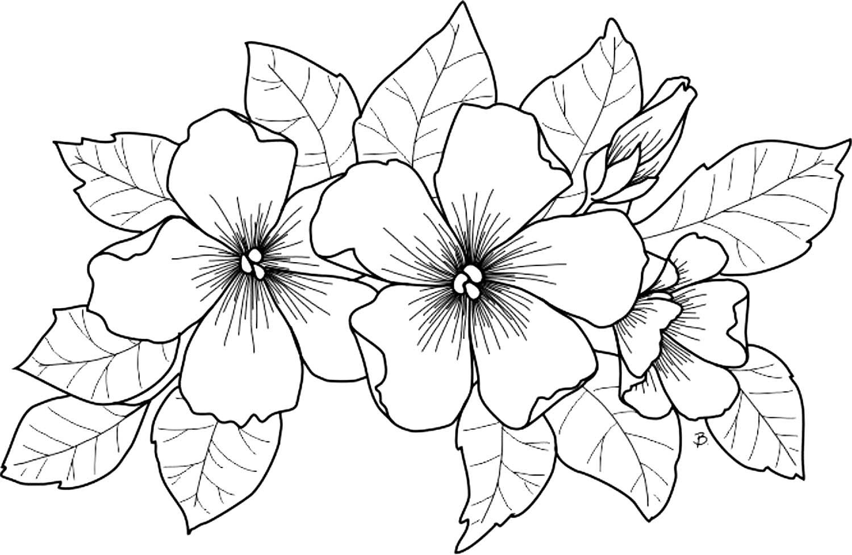 открытка картинки раскраски цветы крупные шаблоны сможете