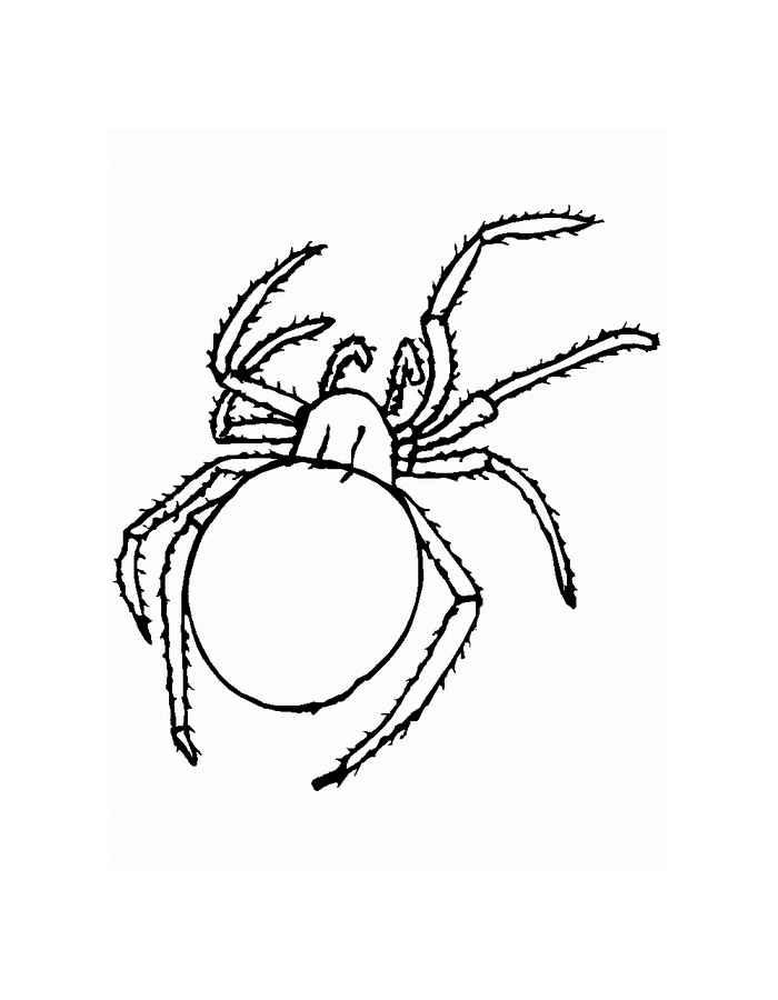 Kleurplaten Vogelspinnen.Kleurplaat Vogelspin Kleurplaten En Zo Kleurplaten Van Spinnen