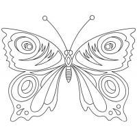 Раскраска цветы и бабочки скачать и распечатать