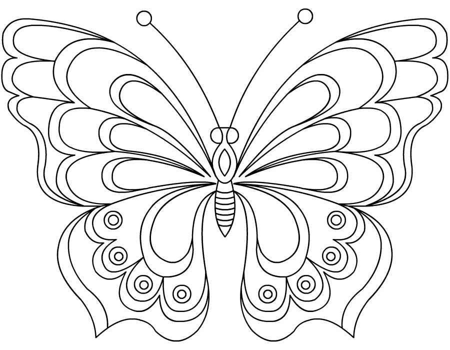 раскраска бабочка картинки