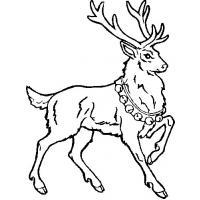 Раскраски оленя для детей