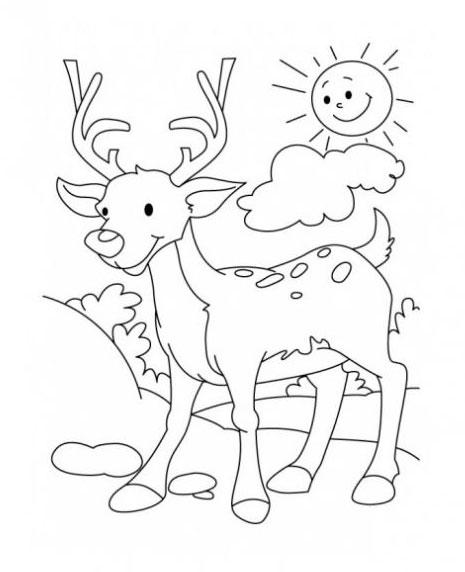Раскраска олень скачать и распечатать