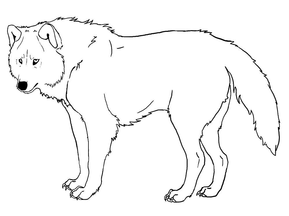 Картинка волка раскраска