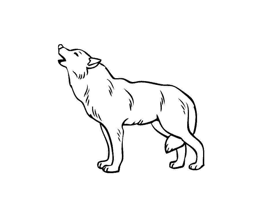 Волк в раскрасках