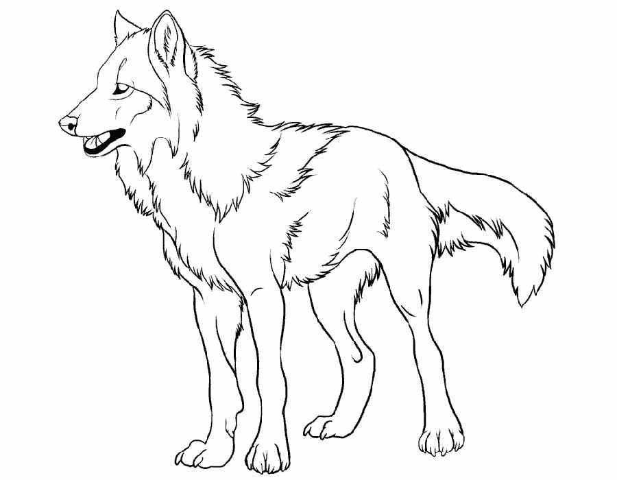 Раскраска волки распечатать