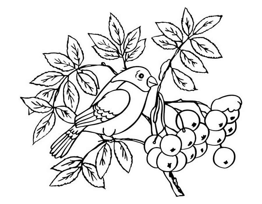 Птицы зимой раскраска