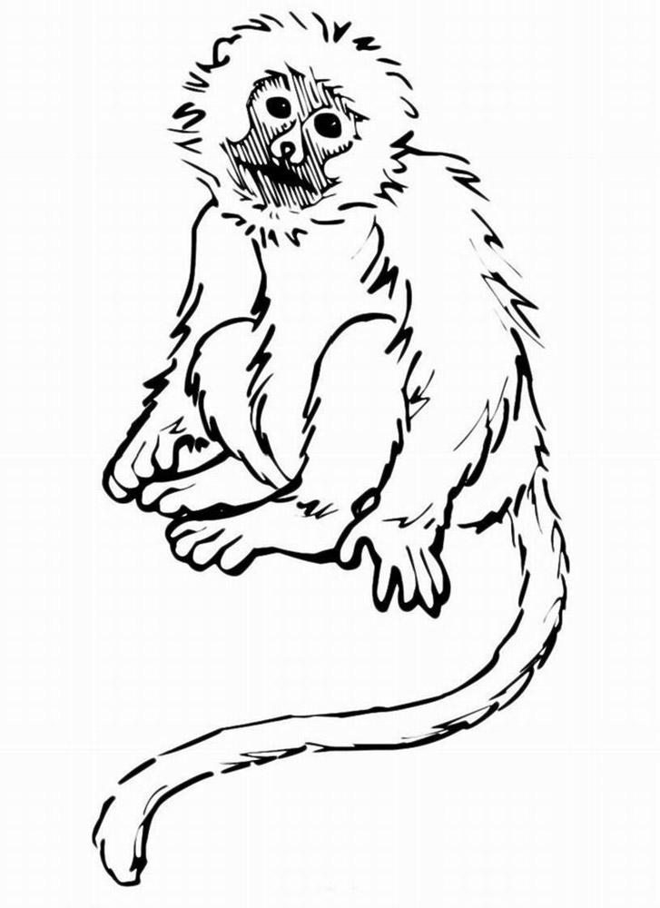 Детские раскраски обезьяна