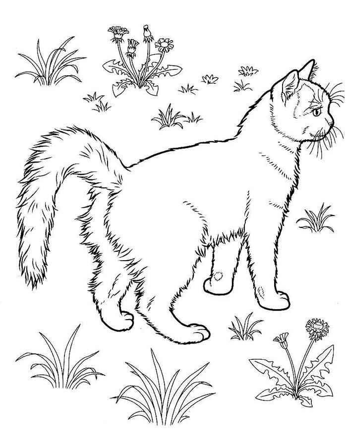 котята знакомятся с пылесос