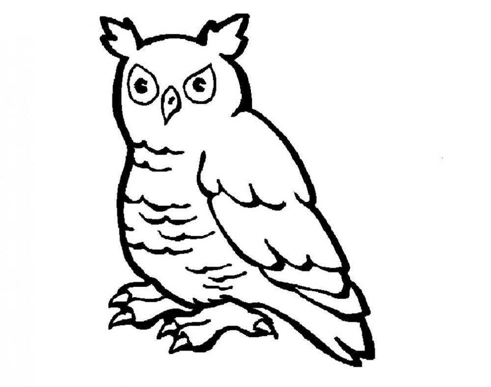 Раскраска сова скачать и распечатать