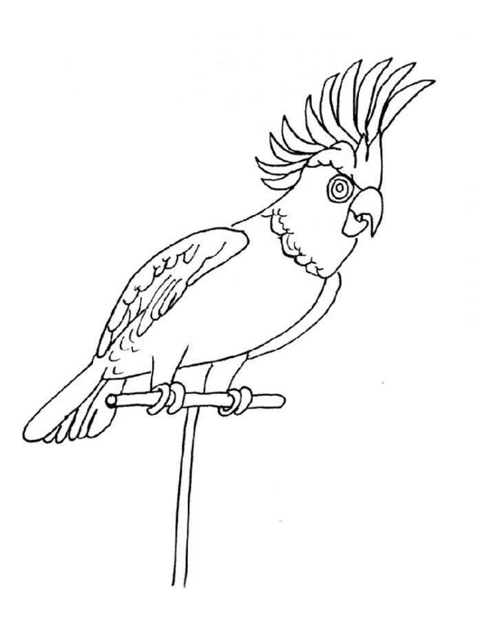 Раскраска попугай волнистый распечатать