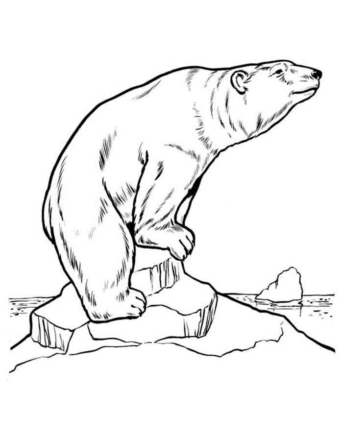 Картинки медведя раскраски