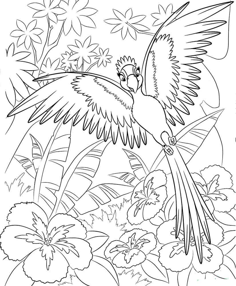 Птицы картинки Скачать антиРаскраски с мультиками распечатать