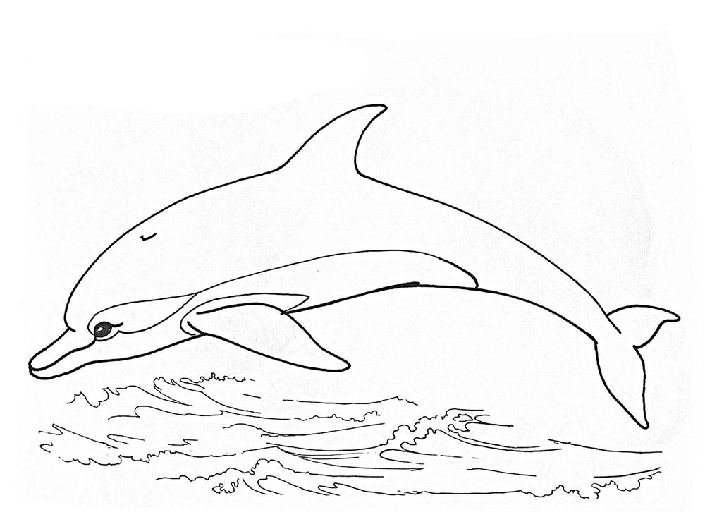 раскраски дельфин картинки
