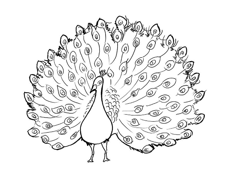 всегда жар-птица без хвоста картинки раскраски первую очередь