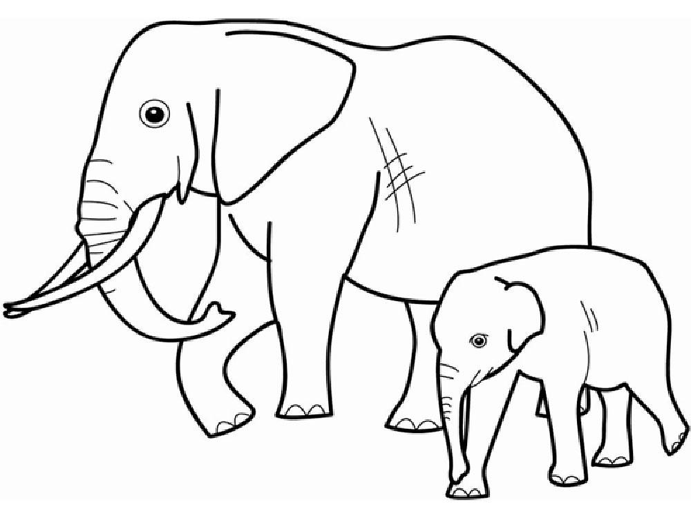 Раскраска для малышей дикие животные - 10
