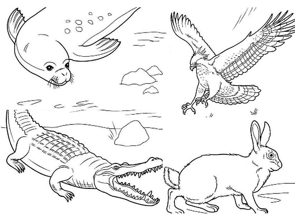Раскраска дикие животные скачать и распечатать
