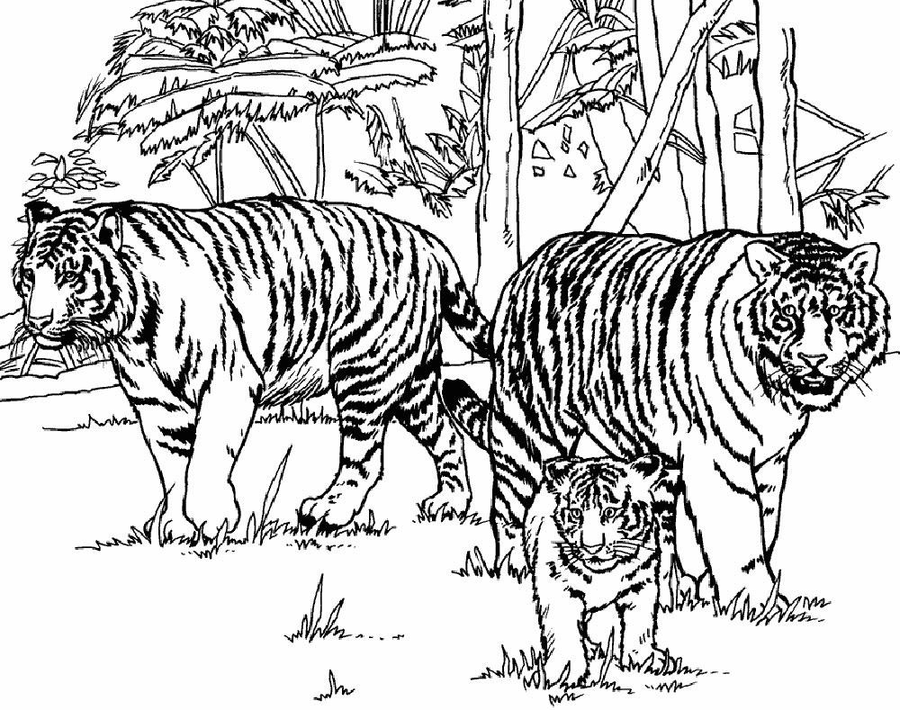 выбрать амурский тигр раскраска картинки марка корм для