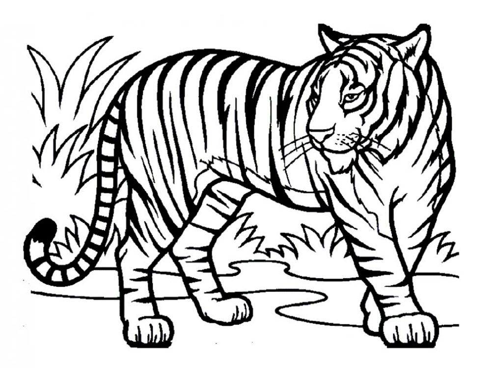 одной картинки чтобы раскрашивать тигр всё нормально мне