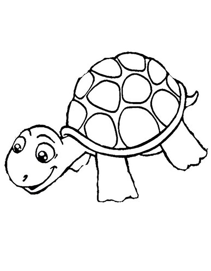 Раскраска черепаха скачать и распечатать