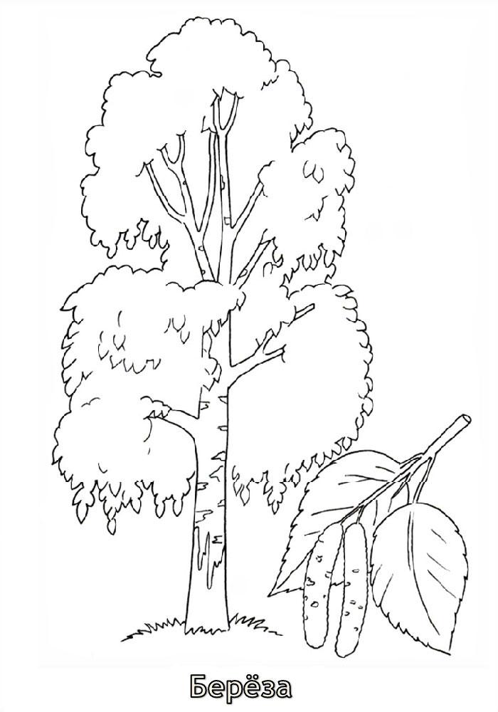 картинка контур березы без листьев дефектами цветовосприятия смогут