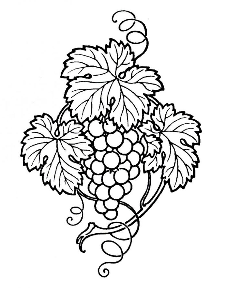 Раскраска виноград скачать и распечатать