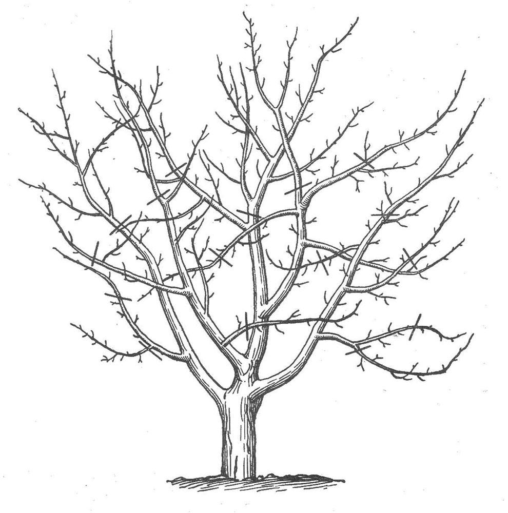 Раскраска дерево без листьев скачать и распечатать
