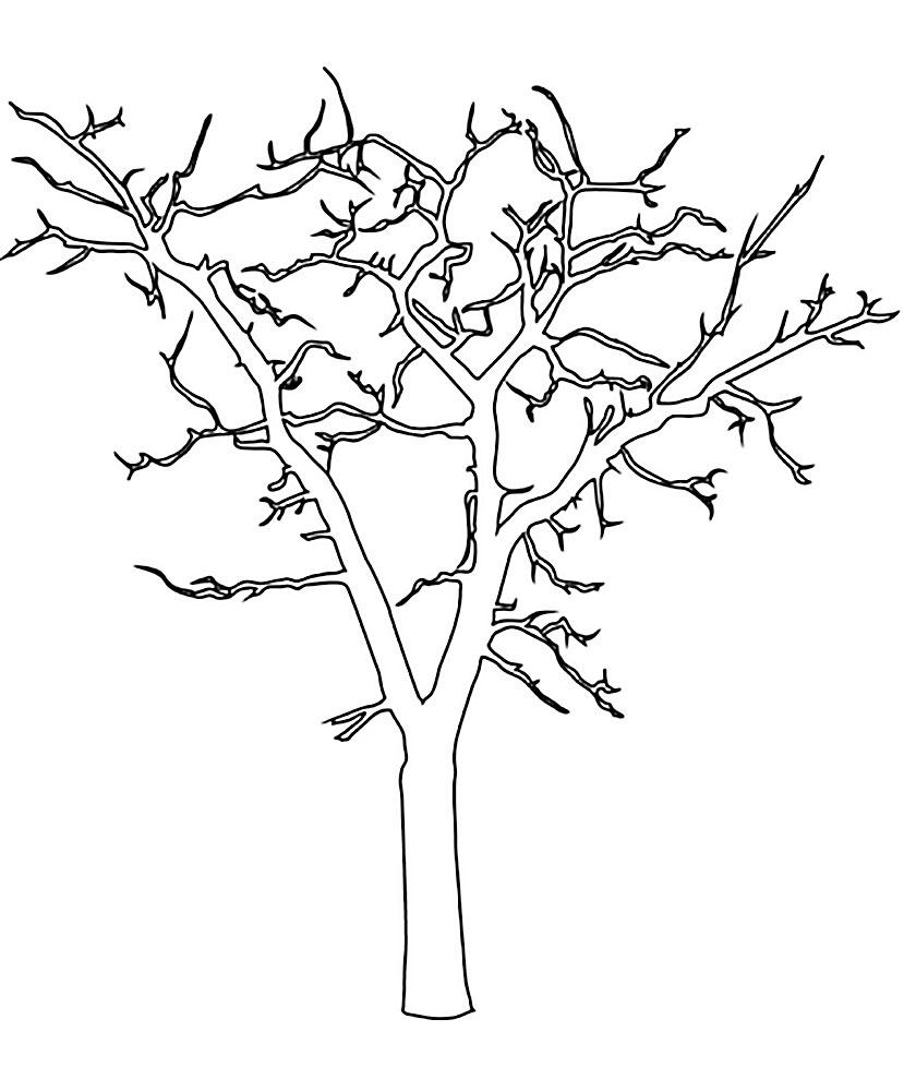 шоссейной ствол кленового дерева картинки коготь