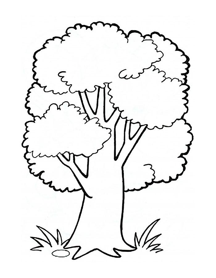 Раскраска дуб скачать и распечатать