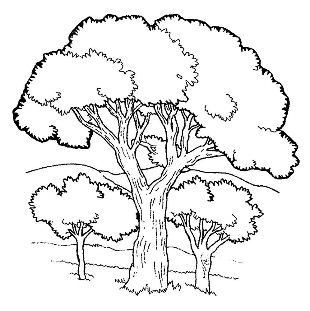 картинки раскраски растения деревья черных колготках писает