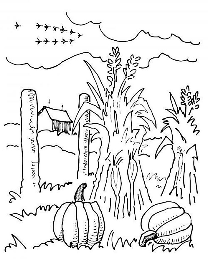 находится картинки раскраски на тему огород назвал